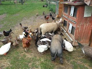 Nos animaux ferme p dagogique de canon - Images d animaux de la ferme ...